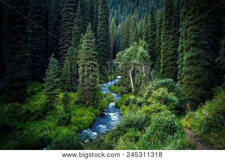 Beautiful Scenic Of Mountain Forest