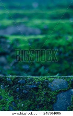 Whimsical Green And Blue Mossy Forest Steps