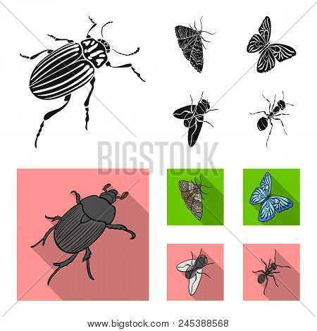 Arthropods Insect Beetle, Moth, Butterfly, Fly. Insects Set Collection Icons In Black, Flat Style Ve