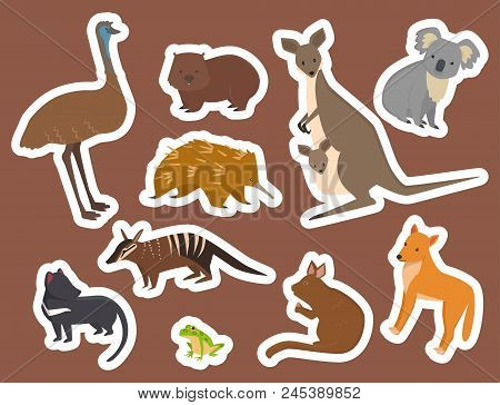 Australia Wild Animals Cartoon Popular Nature Characters Flat Style And Australian Mammal Aussie Nat