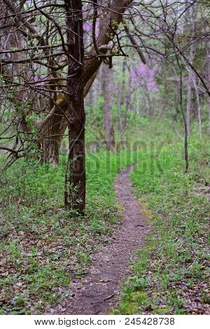 A Thin Trail Winding Through The Woods On An Overcast Day In Missouri.