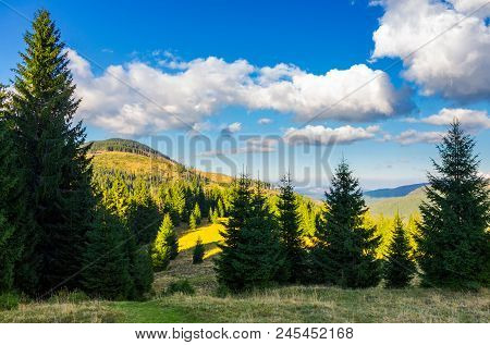 Mountainous Forest And Clouds. Tall Spruce Trees On Hillside. Mountain Peak And Valley In The Distan