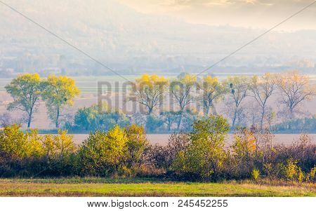Trees Along The Rural Fields In Morning Haze. Lovely Agriculture Scenery In Autumn. Forested Hill In