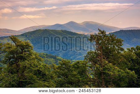 Svydovets Ridge Behind The Beech Forest At Sunset. Beautiful Summer Landscape Of Carpathians