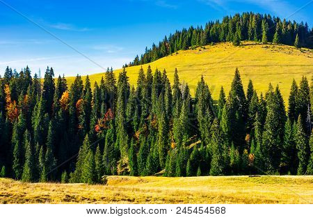 Spruce Forest Around The Hill In Autumn. Beautiful Nature Scenery. Clean Environment Concept. Azure