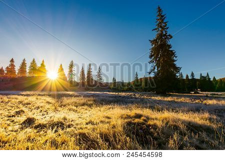 Sunrise In The Forests Of Apuseni Natural Park. Gorgeous Autumn Scenery Among The Spruce Trees On Th