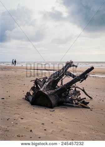 Stump Of Tree On Tusan Beach, Miri, Sarawak, Malaysia.