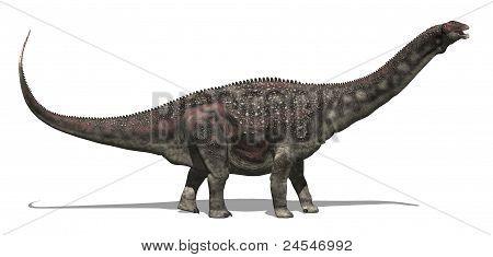 Diamantinasaurus Dinosaur