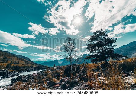 Amazing Wide-angle Mountain Scenery With The Silhouettes Of Two Backlighted Trees (birch And Pine) I
