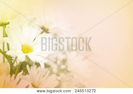 A Beautiful Soft White Daisy Flower On A Blurred Background In Pink, Yellow And Green.  Large Text A