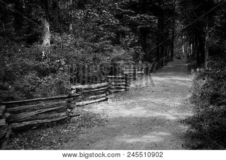 The Lonely Path: Where Lincoln Walked As A Young Boy In Lincoln State Park--indiana, Black And White