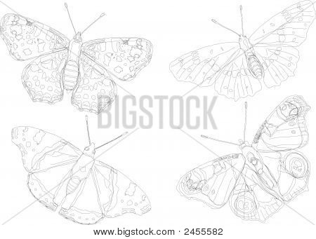 Butterfly Silhouette Collection