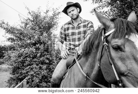 Good Looking, Hunky Cowboy Rides Horse With Boots, Chequered Shirt And Hat