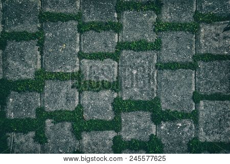 Retro Background Of Concrete Tiles With Green Plants. Dark Detailed Texture. Fresh Grass In Paving S