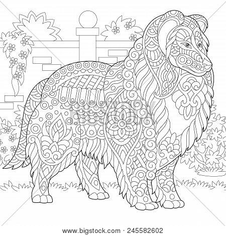 Rough Collie dog. Shetland Sheepdog or Sheltie. Coloring Page. Colouring picture. Adult Coloring Book idea. Freehand sketch drawing. Vector illustration. poster