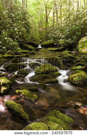 A Creek Flowing Over Mossy Rocks In A Forest.  Elkmont, Great Smoky Mountains National Park, Usa.