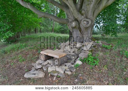 Bench For Rest Under Old Oak, South Bohemia, Czech Republic