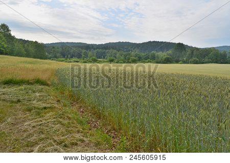 Vief Of Spring Landscape, Southern Bohemia . Czech Republic