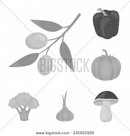 Different Kinds Of Vegetables Monochrome Icons In Set Collection For Design. Vegetables And Vitamins