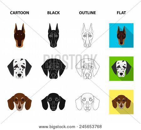 Muzzle Of Different Breeds Of Dogs.dog Of The Breed St. Bernard, Golden Retriever, Doberman, Dalmati
