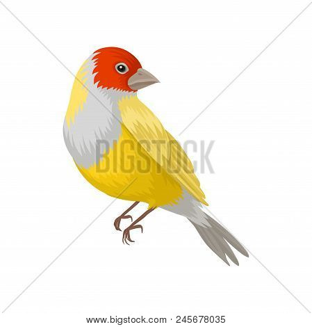 Detailed portrait of yellow lady gouldian finch with red head and white breast. Exotic bird. Beautiful creature with colorful feathers. Design for ornithology book. Isolated vector illustration. poster