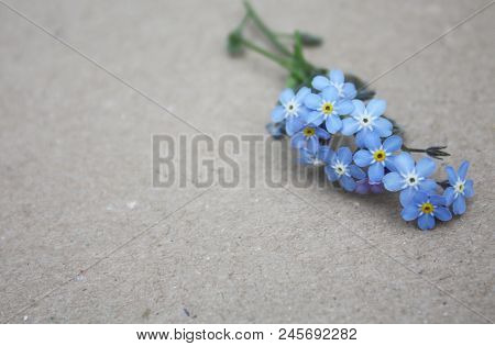 Forget-me-not Blue Spring Flower, Floral Forget Me Not Decor Empty Cardboard Background
