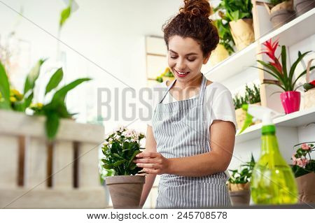 Professional Florist. Delighted Cheerful Woman Caring About A Flower While Working As A Florist In T