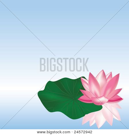 Lotus On The Water