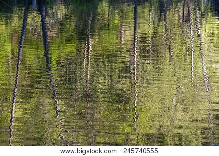 Bare Tree Trunks Reflected In Rippling Water Of Mountain Fork River, Southeast Oklahoma