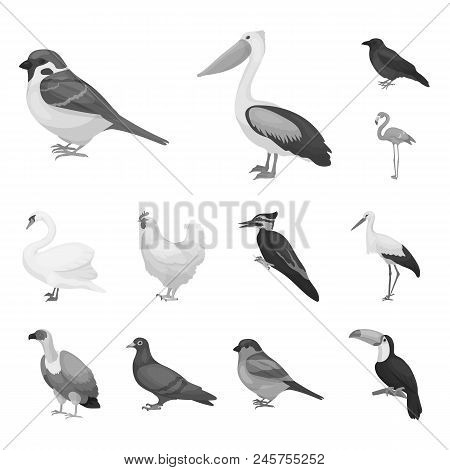 Types Of Birds Monochrome Icons In Set Collection For Design. Home And Wild Bird Vector Symbol Stock