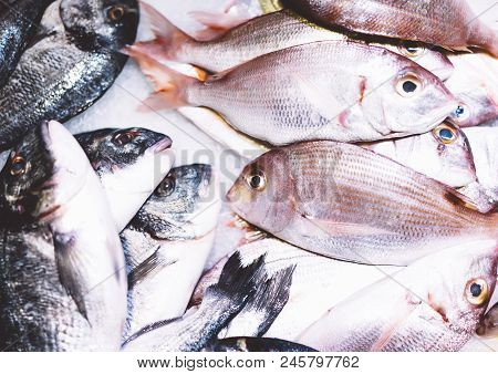 Bird Dorado Fish On Ice Background On The Market, Closup Of Fresh Marine Products, Useful Dietary Se