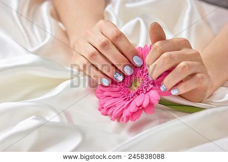Female Manicured Hands Holding Gerbera. Beautiful Woman Hands With Gentle Winter Manicure Holding Pi