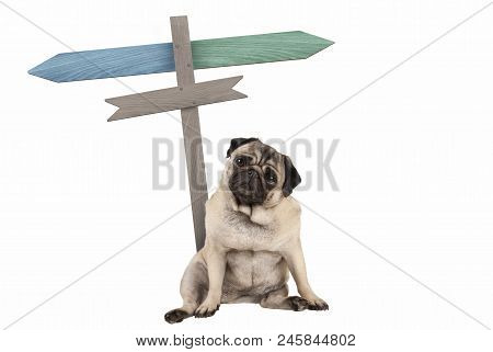 Funny Cute Pug Puppy Dog Sitting Down Next To Blank Signpost; With Signs Pointing Left And Right, Is