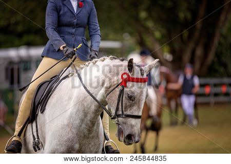 A Show Horse Being Ridden Around The Arena Of A Country Show For Judging