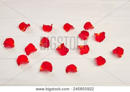 Red Rose Petals On White Background. Petals Of Red Rose On White Wooden Background. Romance And Cele