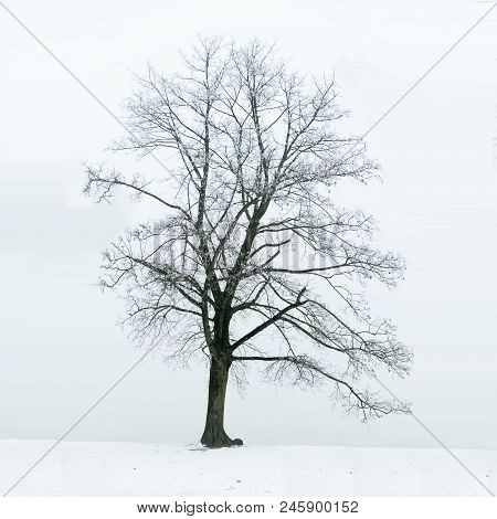 Lonely Tree In Winter As A Symbol Of Loneliness, Sadness And Depression