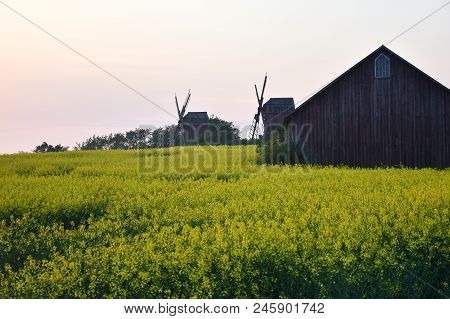 Old Windmills And An Old Barn By A Blossom Canola Field At The Swedish Island Oland