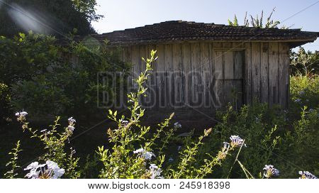 Very Simple Wooden House, Unkempt, A Poor Farm In Brazil, South America