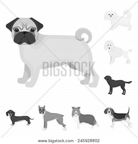 Dog Breeds Monochrome Icons In Set Collection For Design.dog Pet Vector Symbol Stock  Illustration.