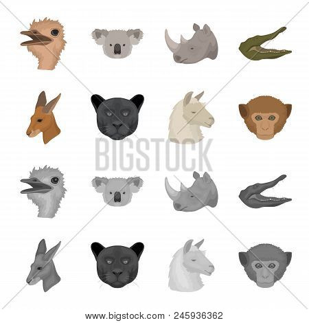 Kangaroos, Llama, Monkey, Panther, Realistic Animals Set Collection Icons In Cartoon, Monochrome Sty