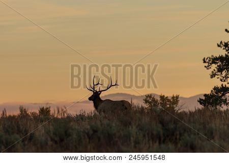 A Bull Elk Silhouetted In An Autumn Sunrise