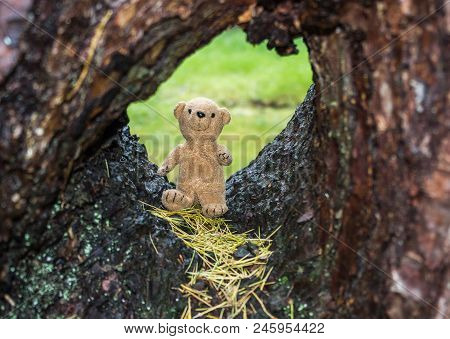 A Cute Teddy Bear Standing In The Hole Of A Tree.