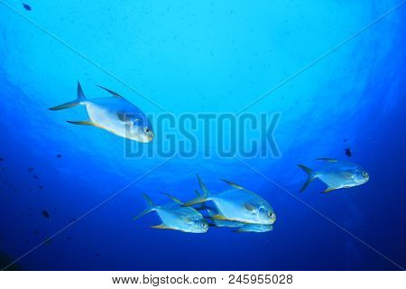 Blue ocean and fish. Pompano fish