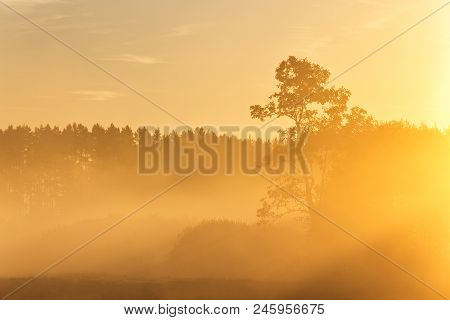 Pine Silhouette In Sunrise Morning Misty Light. Foggy Sunny Morning On Summer Field. Misty Morning P
