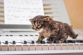 The first steps in music. A little kitten goes along the piano keys. Puss in front of the piano poster