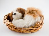 a toy dog a sleep in a straw basket poster