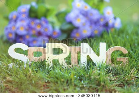 Spring Time. Spring Inscription Made Of Wooden Letters In Green Grass And Blue Primrose Flowers With