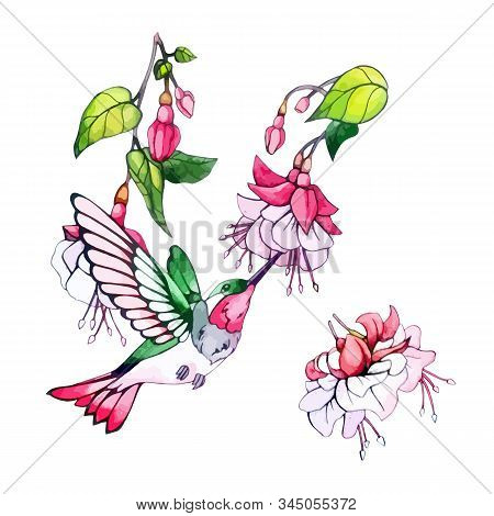 Floral Watercolor Decorative Elements. Spring, Summer Illustration, Pink Flower, Green Leaves, Branc