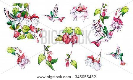 Spring, Summer Set, Pink Flower, Green Leaves, Branch, Colibri. Collection Floral Watercolor Decorat