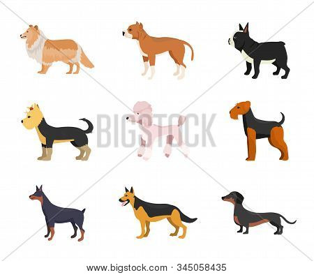 Different Dog Breeds Flat Vector Illustrations Set. Dachshund, Doberman And Shepherd. Purebred Puppi